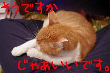 2_20110126224241.jpg