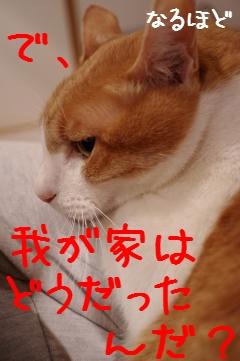 2_20110214205759.jpg