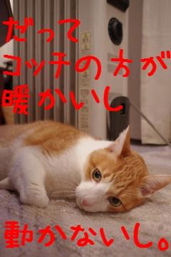 2_20110224214042.jpg