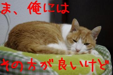 2_20110226174153.jpg