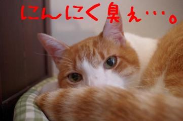2_20110227165015.jpg
