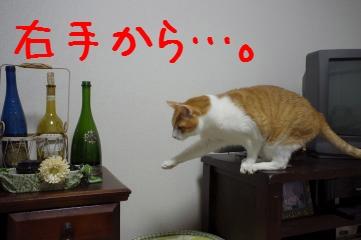 2_20110323210332.jpg