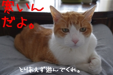 2_20110327231234.jpg