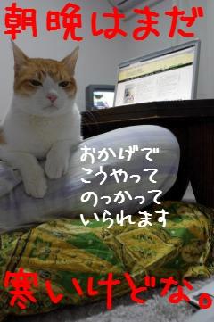 2_20110405194033.jpg