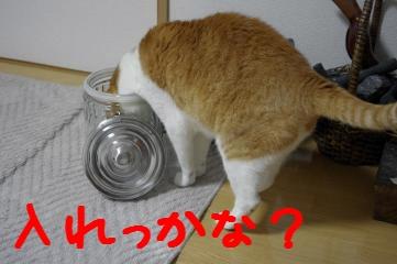 2_20110410185757.jpg
