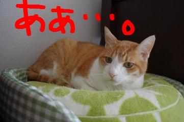 2_20110429161306.jpg