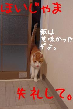 3_20100307202949.jpg