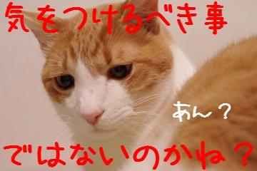 3_20100315204801.jpg