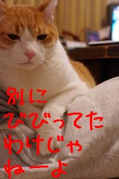 3_20100318211906.jpg
