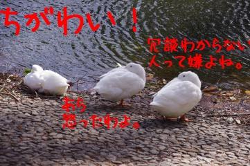 3_20100322222913.jpg
