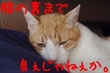 3_20100429193842.jpg