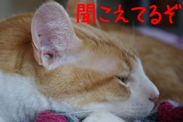 3_20100704145816.jpg