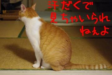 3_20100814220122.jpg