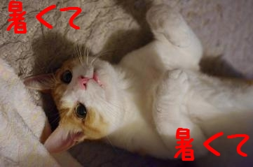 3_20100825220323.jpg