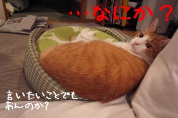3_20101123125211.jpg