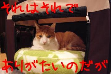 3_20101127205546.jpg