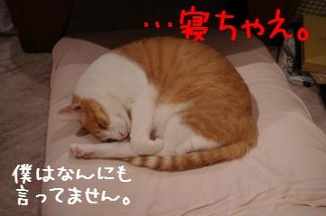 3_20101210202433.jpg