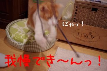 3_20101228201151.jpg