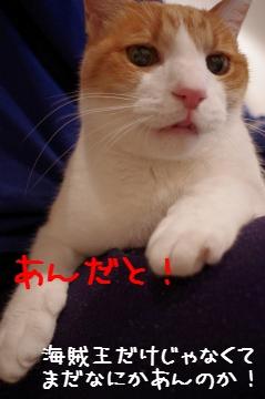 3_20110117231603.jpg