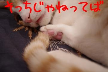 3_20110128205631.jpg