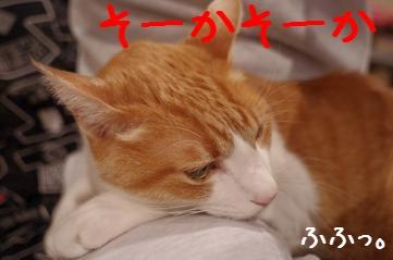 3_20110214205759.jpg