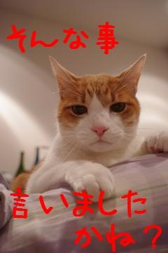 3_20110224214042.jpg