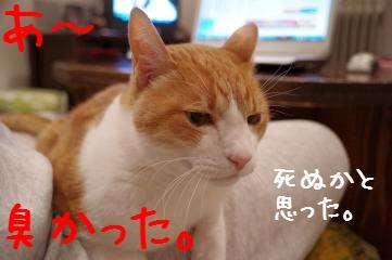 3_20110228215645.jpg