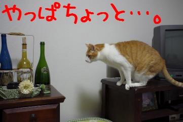 3_20110323210332.jpg
