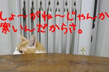 3_20110324213313.jpg