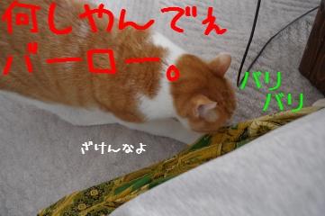 3_20110326081256.jpg