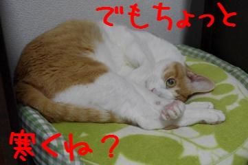 3_20110403181852.jpg