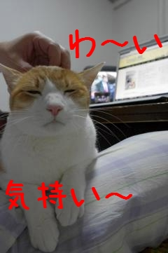 3_20110405194033.jpg