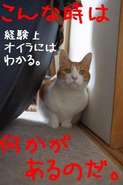 3_20110417092522.jpg