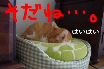 3_20110429161306.jpg