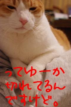 4_20100318211906.jpg