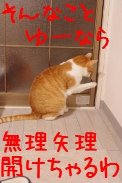 4_20100329211506.jpg