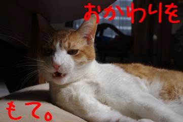 4_20100515224013.jpg