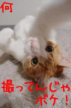 4_20100617221613.jpg