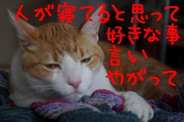 4_20100704145815.jpg