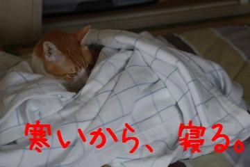 4_20100713221902.jpg