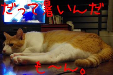 4_20100827211515.jpg