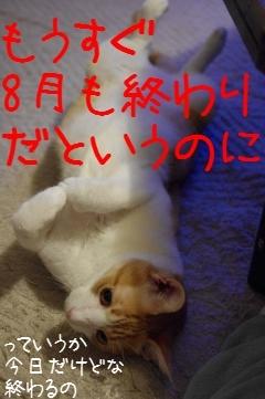 4_20100831211203.jpg