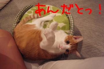 4_20101123125211.jpg