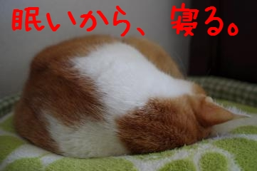 4_20101231180719.jpg