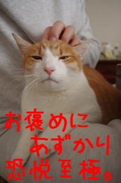 4_20110101082130.jpg