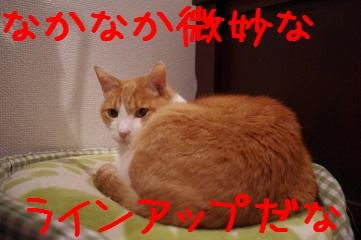 4_20110130130503.jpg