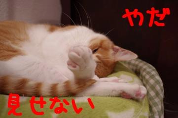 4_20110202202501.jpg