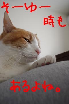 4_20110213092803.jpg