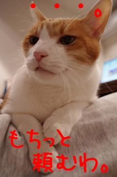 4_20110218205519.jpg