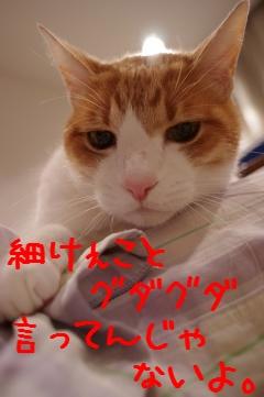 4_20110224214042.jpg